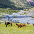 Horses pasturing in mountains near the river — Stock Photo #32229501