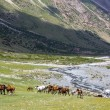 Herd of horses pasturing near mountain river — Stock Photo #32229661