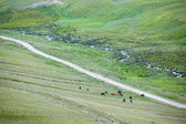 Two herds of horses — Stock Photo