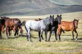 Group of horses looking at camera — Stock Photo