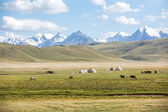 Horses grazing in mountains near yurts — Stock Photo