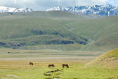 Three horses grazing near stream in mountains — Stockfoto