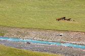 Horses resting near blue river — Stock Photo