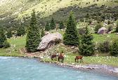 四匹马放牧在蓝色山脉河 — 图库照片