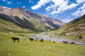 Herd of horses pasturing in Tien Shan mountains — Stock Photo