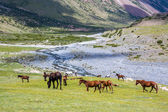 Horses pasturing in mountains near the river — Stock Photo