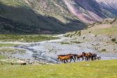 Grupo de caballos con potros — Foto de Stock