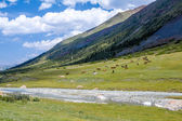 Large group of horses grazing near river — ストック写真