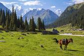 Paisaje de montaña con caballo — Foto de Stock