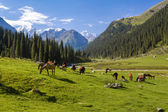 Mountain landscape with herd of horses — Stock Photo