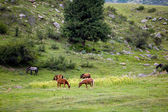 Grazing horses on the field — Stock Photo