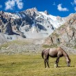 Horse in mountains feeding grass at sunny day — Stock Photo