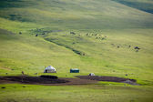 Yurt and livestock in Kyrgyzstan — Foto Stock