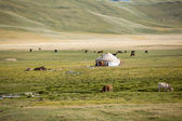 Farm animals pasturing near yurt — Stock Photo