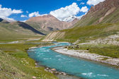 Cows pasturing near turquoise river, Tien Shan — Stock Photo