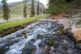 Amazing spring in Tien Shan mountains — Stock Photo