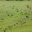 Large group of farm animals in the field — Foto de Stock