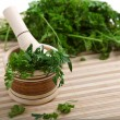 Stock Photo: Cilantro