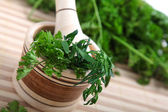 Cilantro — Stock Photo