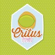 Vector de stock : Citrus fruit