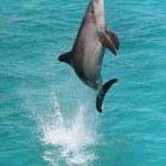 ������, ������: Dolphin Jump