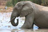 Elephant Mud Bath — Stock Photo
