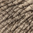 Stock Photo: African Elephant Skin