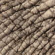 African Elephant Skin — Stock Photo