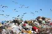 Waste Disposal Dump and Birds — Stock Photo