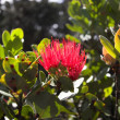 Flower blooming in Hawaii Volcanoes National Park - Stock Photo