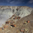 Petrified forest — Stock Photo #13905599
