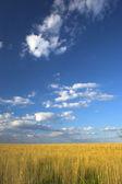 Farm land — Stock Photo