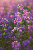 Macro pink wild flowers — Stock Photo