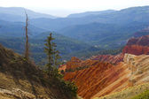 Cedar Breaks — Stockfoto