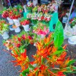 flowers in farmers market in hilo — Stock Photo