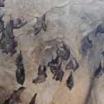 Bats — Stock Photo