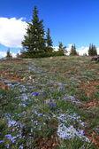 Alpine meadows in Wyoming — Stock Photo
