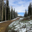 Stock Photo: Colorado Road