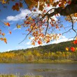Fall foliage colors — Foto de Stock