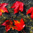 Fall foliage colors — ストック写真