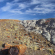 Petrified forest — Stock Photo