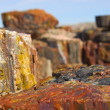 Petrified forest — Stock Photo #14378775