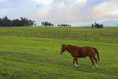 Green landscape and horse — Stock Photo