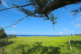 Green fields in Hawaii — Stock Photo