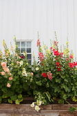 White barn and flowers — Stock Photo