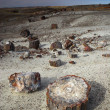 Petrified forest — Stock Photo #14824655