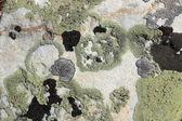 Rock surface — Stock Photo