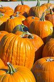 Helloween pumpkin — Stock fotografie
