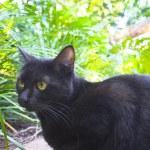 Predator cat — Stock Photo