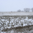 Stock Photo: Snow falling on the farm